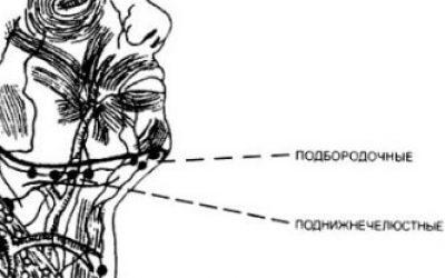 Лимфоузлы на шее сзади: расположение, диагностика, лечение
