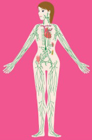 Обволакивает организм, его органы и ткани