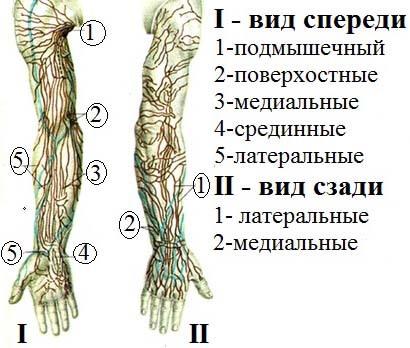 Лимфоузлы локтевой сустав руки профилактика артроза коленного сустава велосипед