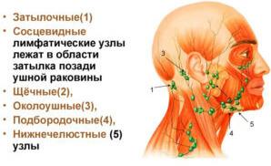 Виды в области шеи