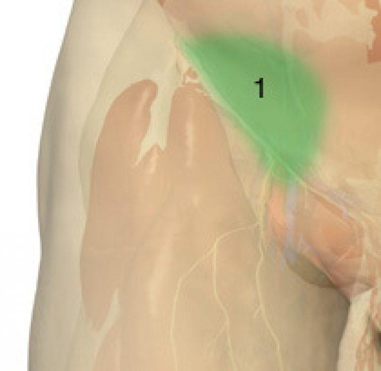 Лимфоузлы в паху от простатита терапии простатита и импотенции терапии простатита и импотенции