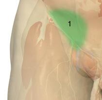 Горячность и болезненность пораженной ткани