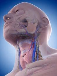 Система узелков и тканей