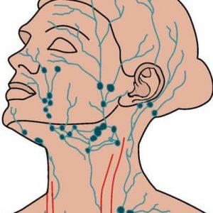 Сетка иммунных желез