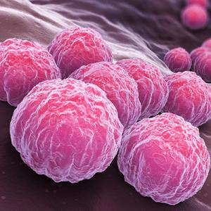 Бактерии хламидиоза
