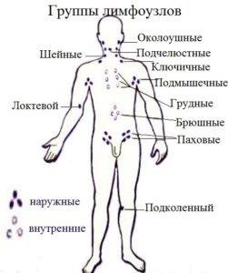 Разновидности и группы желез